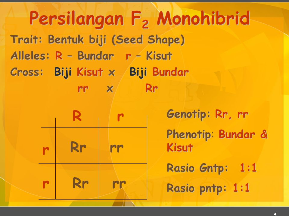 Persilangan F2 Monohibrid