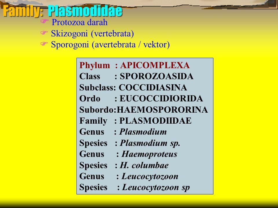 Family: Plasmodidae  Protozoa darah  Skizogoni (vertebrata)
