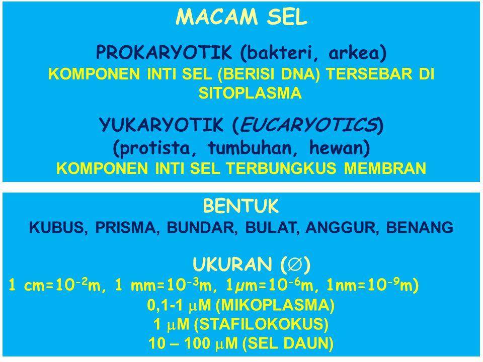 MACAM SEL PROKARYOTIK (bakteri, arkea) YUKARYOTIK (EUCARYOTICS)