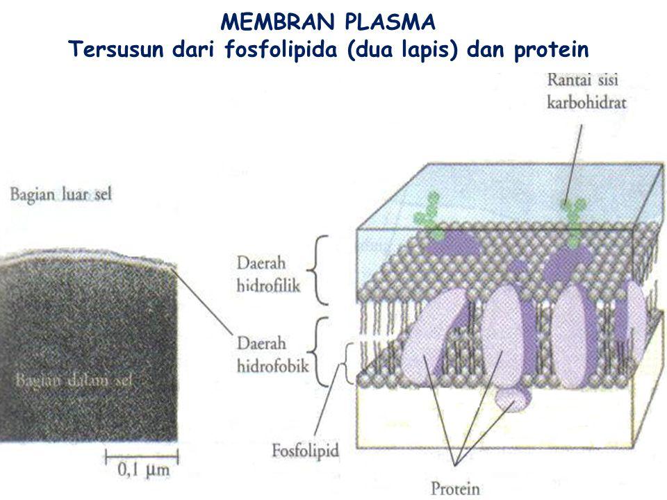 Tersusun dari fosfolipida (dua lapis) dan protein