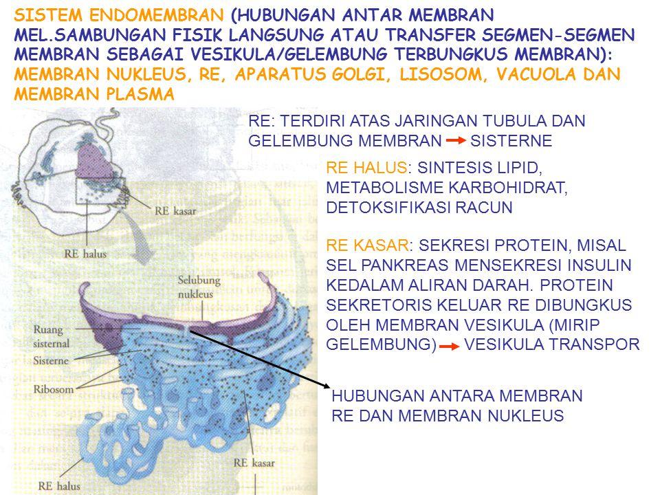 SISTEM ENDOMEMBRAN (HUBUNGAN ANTAR MEMBRAN MEL