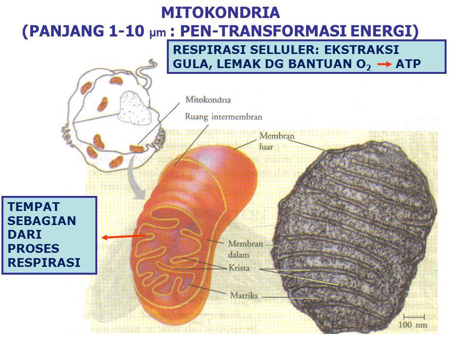 (PANJANG 1-10 µm : PEN-TRANSFORMASI ENERGI)