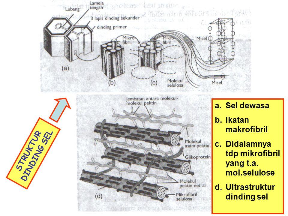 Sel dewasa Ikatan makrofibril. Didalamnya tdp mikrofibril yang t.a. mol.selulose. Ultrastruktur dinding sel.