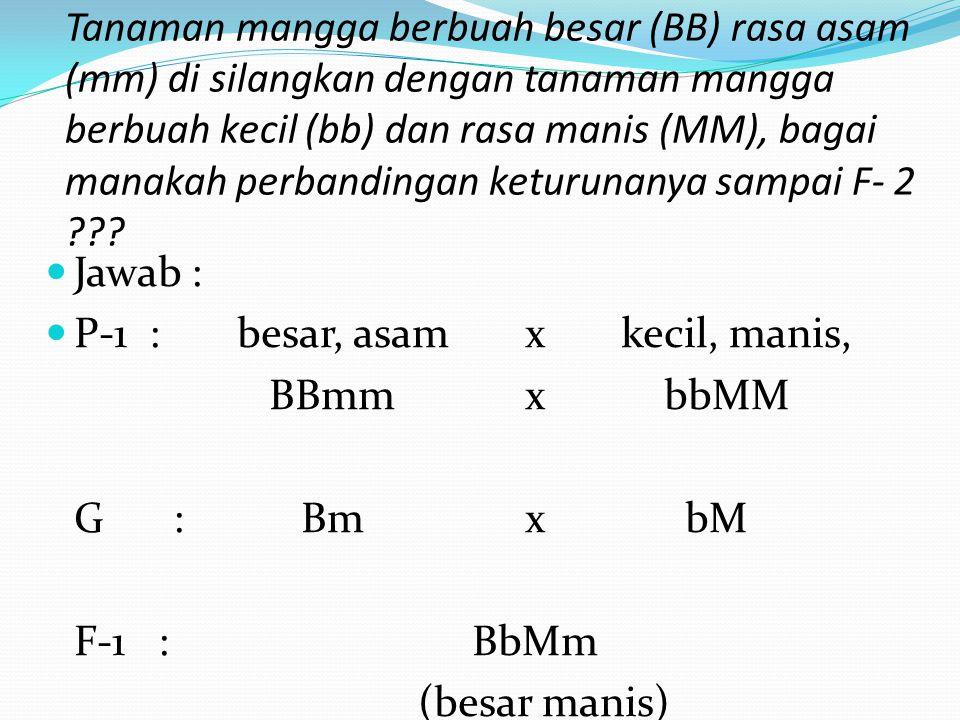 Tanaman mangga berbuah besar (BB) rasa asam (mm) di silangkan dengan tanaman mangga berbuah kecil (bb) dan rasa manis (MM), bagai manakah perbandingan keturunanya sampai F- 2