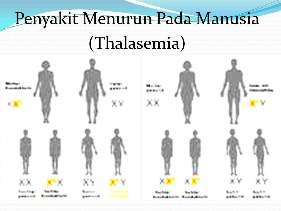 Penyakit Menurun Pada Manusia (Thalasemia)