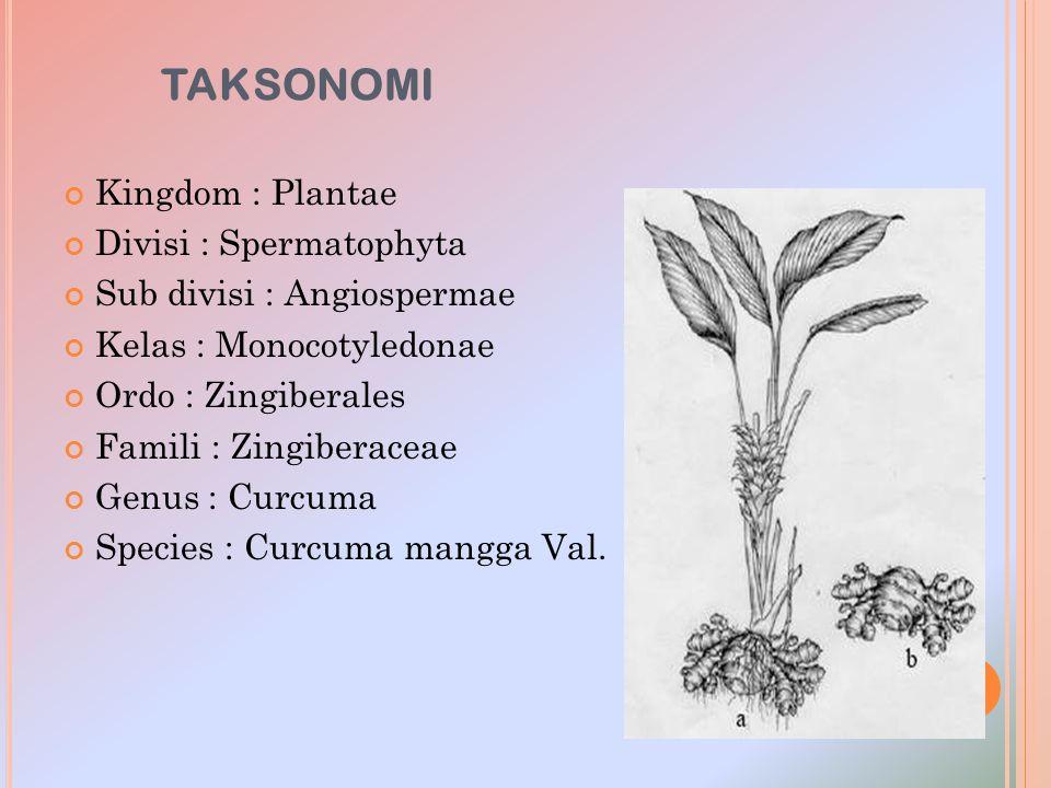 TAKSONOMI Kingdom : Plantae Divisi : Spermatophyta