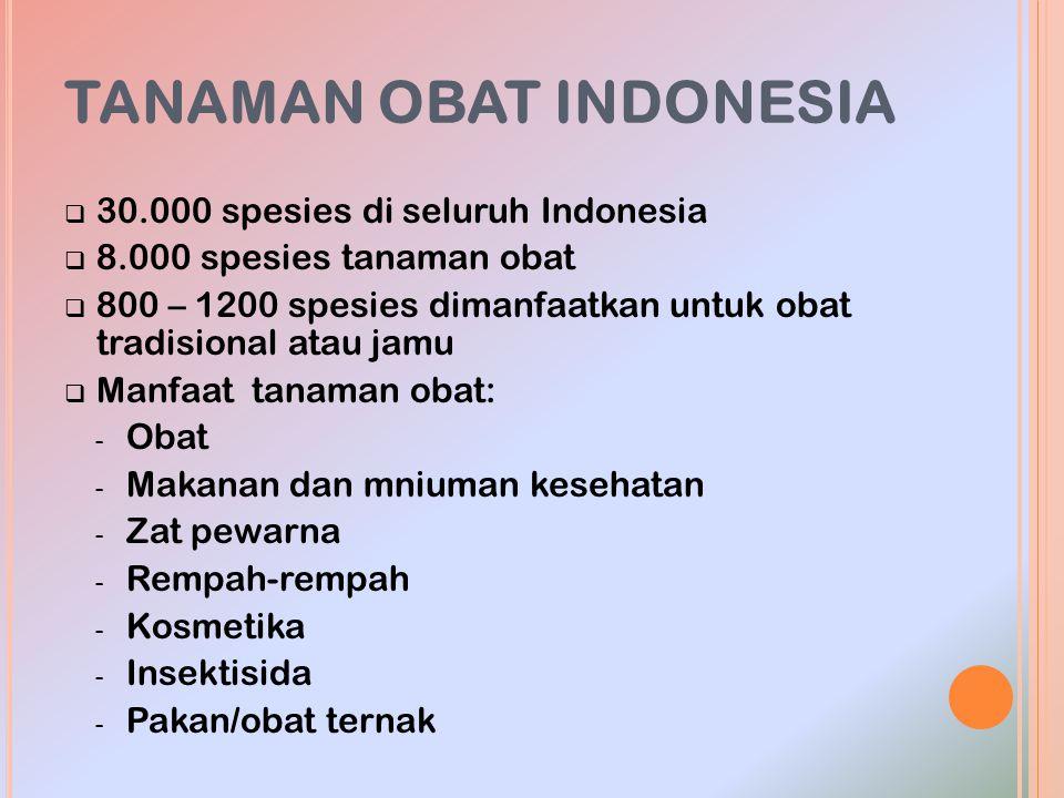 TANAMAN OBAT INDONESIA