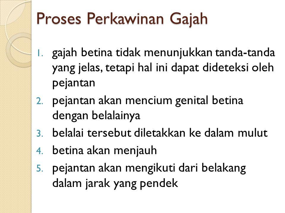 Proses Perkawinan Gajah