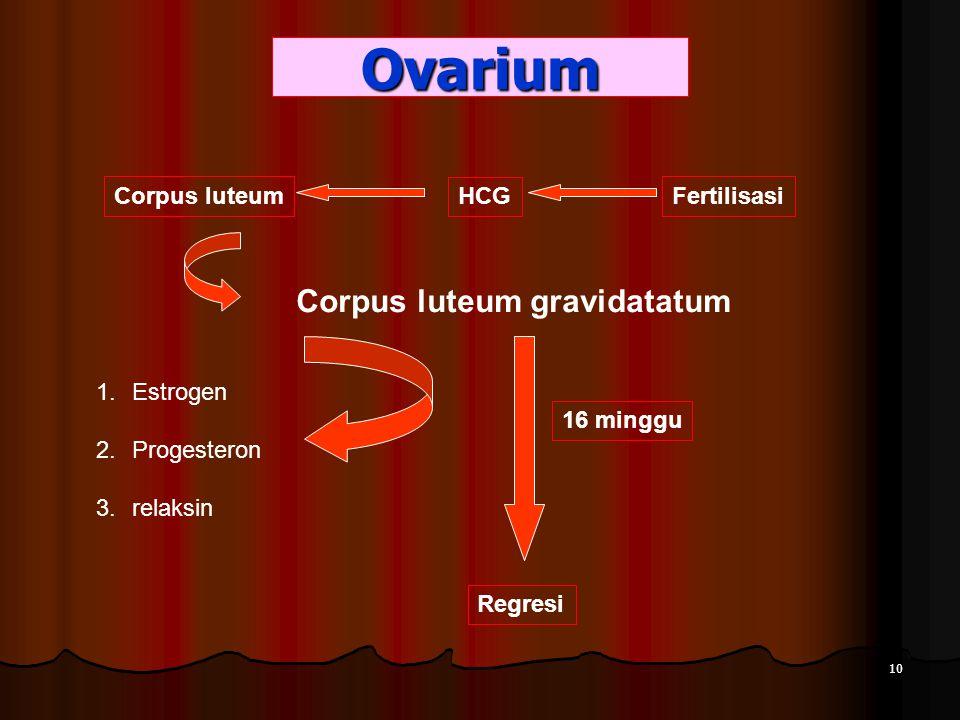 Ovarium Corpus luteum gravidatatum Corpus luteum HCG Fertilisasi