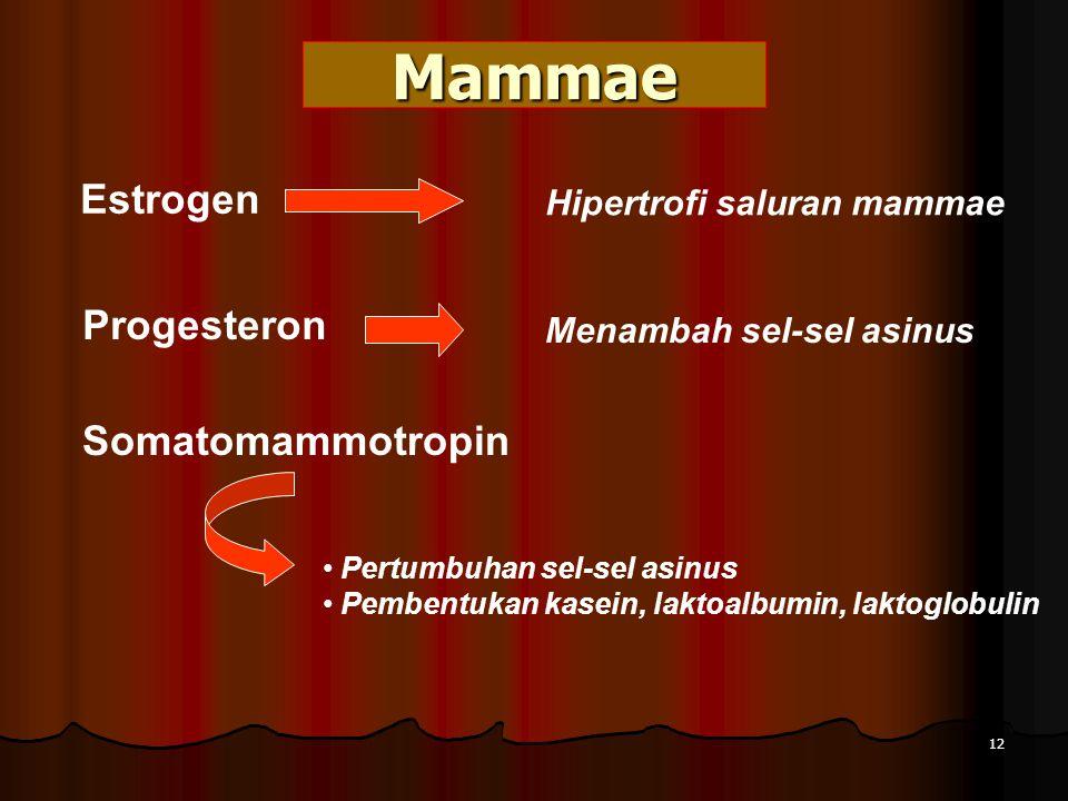 Mammae Estrogen Progesteron Somatomammotropin