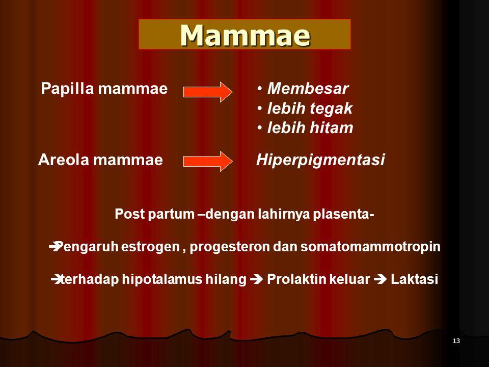 Mammae Papilla mammae Membesar lebih tegak lebih hitam Areola mammae