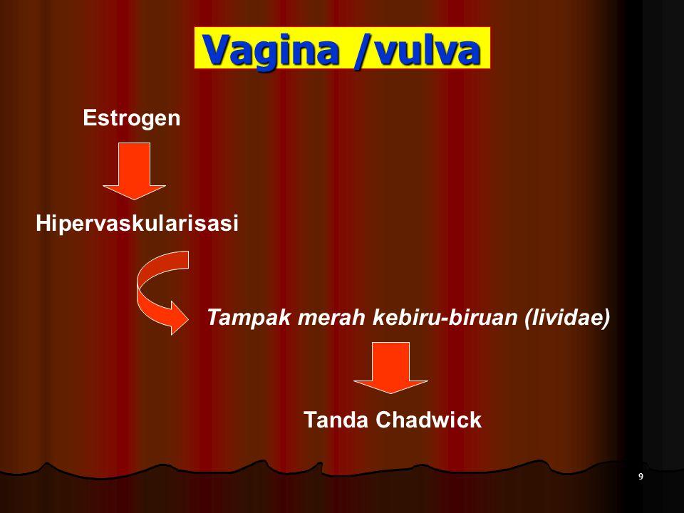 Vagina /vulva Estrogen Hipervaskularisasi