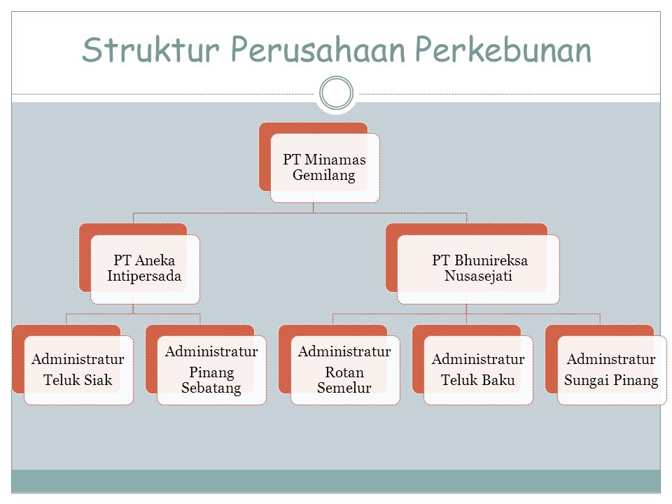 Struktur Perusahaan Perkebunan