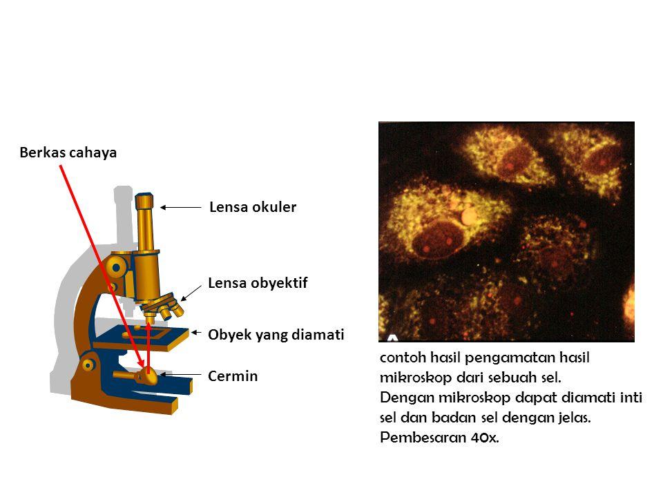 Berkas cahaya Lensa okuler. Lensa obyektif. Obyek yang diamati. contoh hasil pengamatan hasil mikroskop dari sebuah sel.