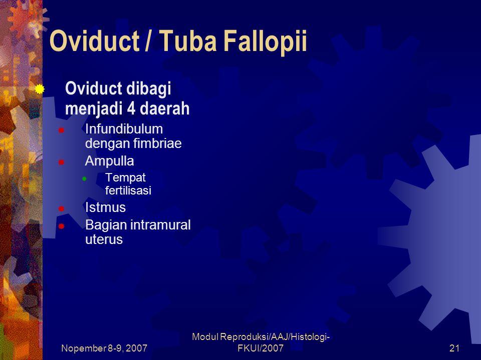 Oviduct / Tuba Fallopii