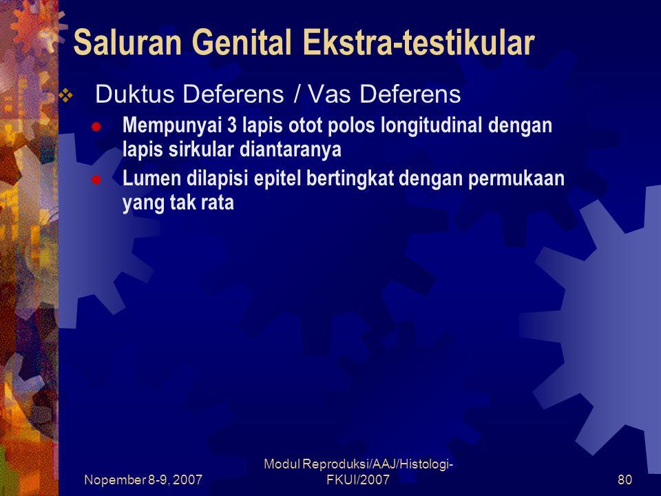 Saluran Genital Ekstra-testikular