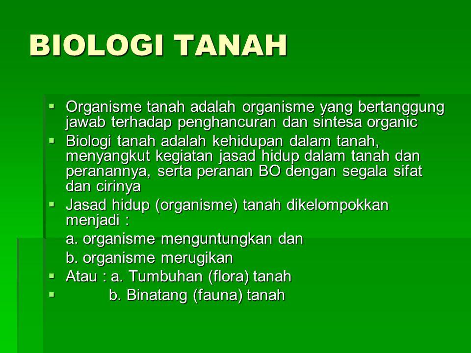 BIOLOGI TANAH Organisme tanah adalah organisme yang bertanggung jawab terhadap penghancuran dan sintesa organic.