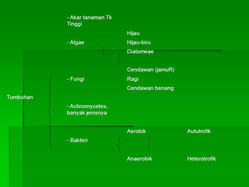 Tumbuhan - Akar tanaman Tk Tinggi. Hijau. - Algae. Hijau-biru. Diatomeae. Cendawan (jamuR) - Fungi.