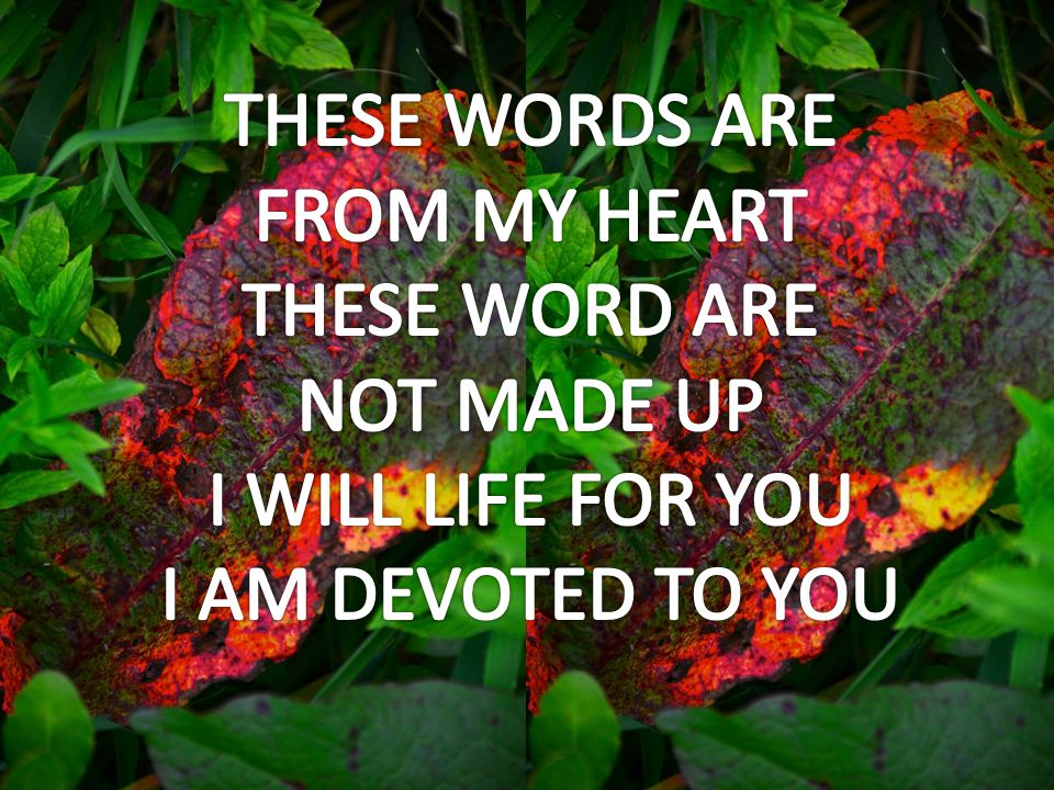 FROM MY HEART THESE WORD ARE