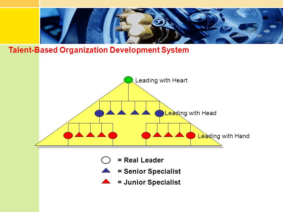 Talent-Based Organization Development System