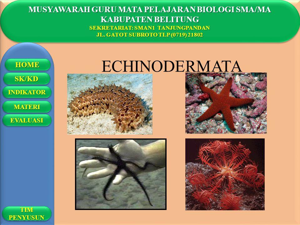 ECHINODERMATA MUSYAWARAH GURU MATA PELAJARAN BIOLOGI SMA/MA