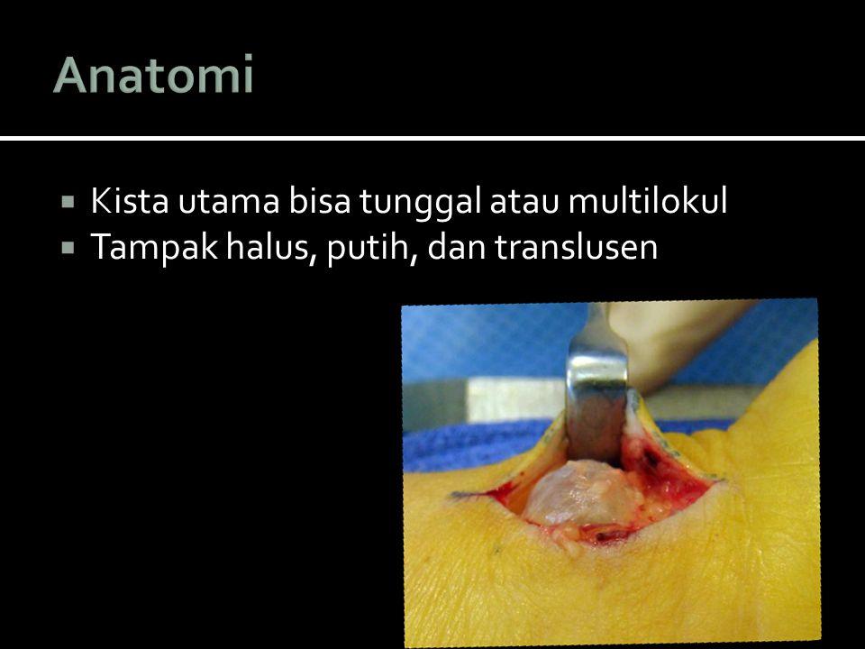 Anatomi Kista utama bisa tunggal atau multilokul