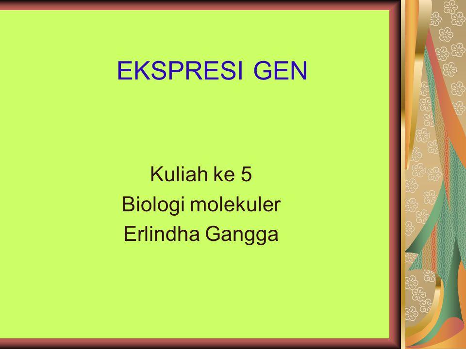 Kuliah ke 5 Biologi molekuler Erlindha Gangga