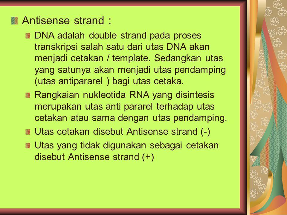 Antisense strand :