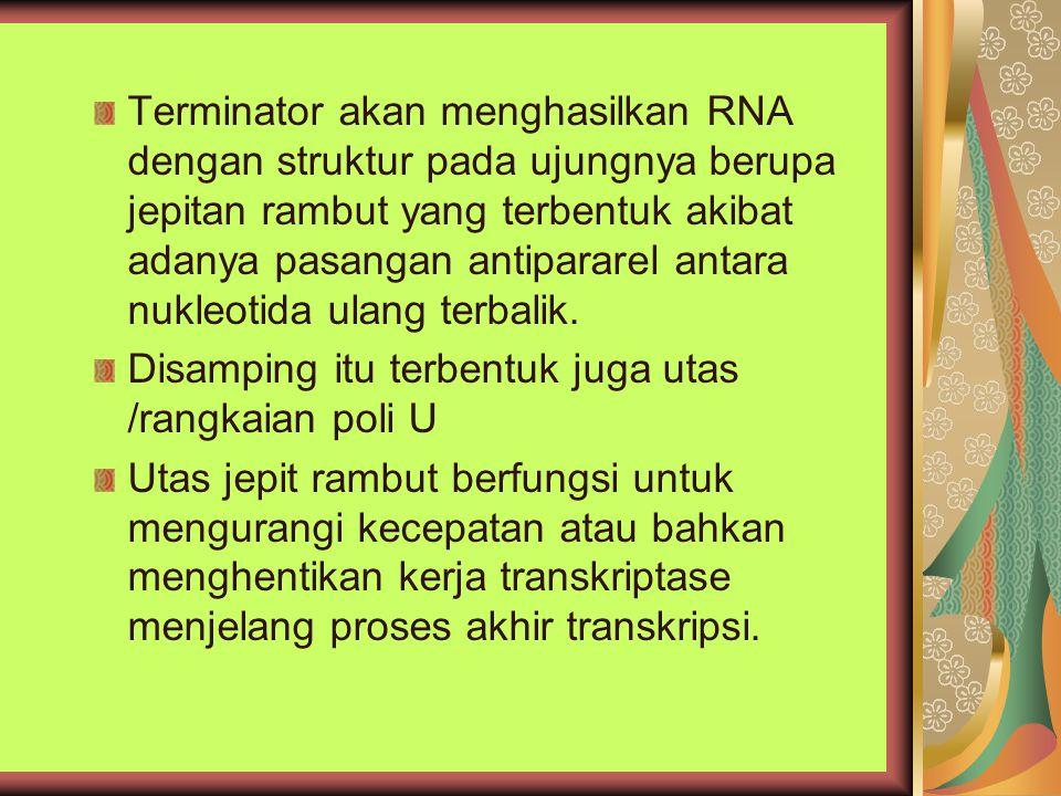 Terminator akan menghasilkan RNA dengan struktur pada ujungnya berupa jepitan rambut yang terbentuk akibat adanya pasangan antipararel antara nukleotida ulang terbalik.