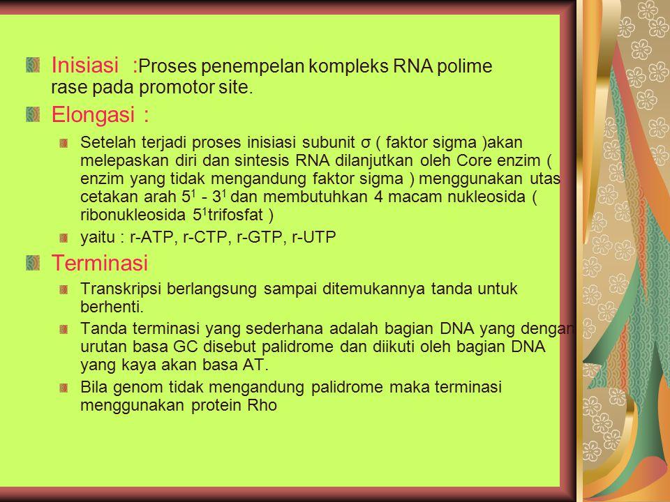 Inisiasi :Proses penempelan kompleks RNA polime