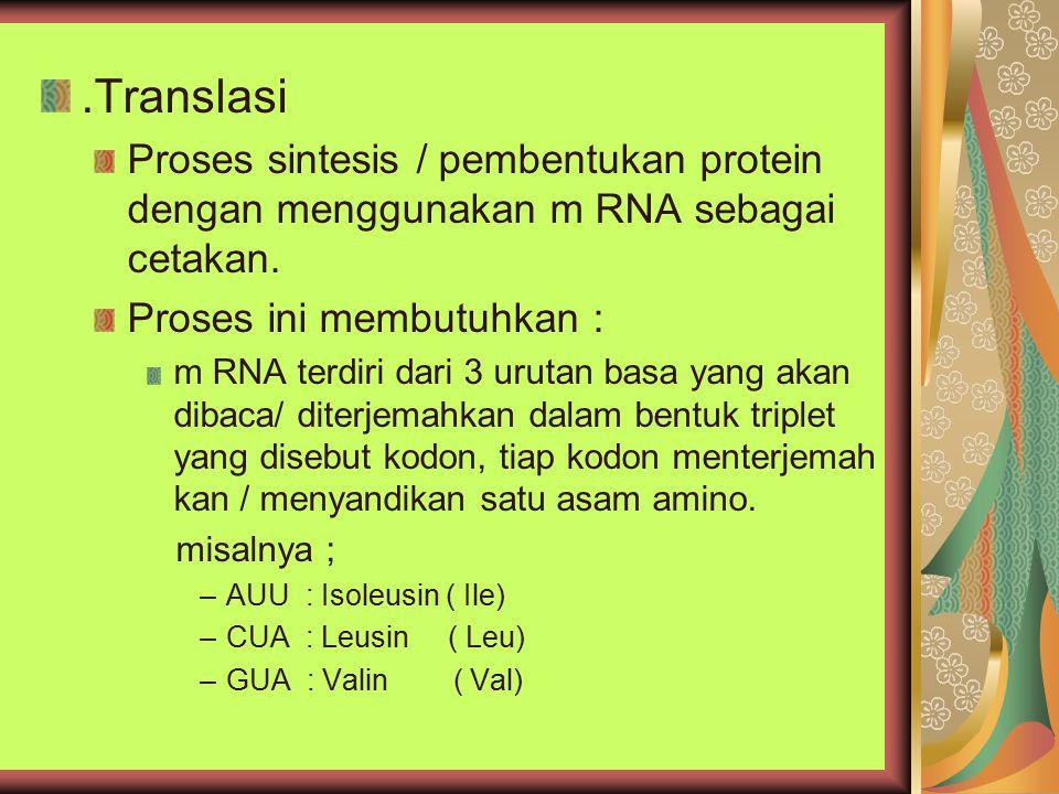 .Translasi Proses sintesis / pembentukan protein dengan menggunakan m RNA sebagai cetakan. Proses ini membutuhkan :
