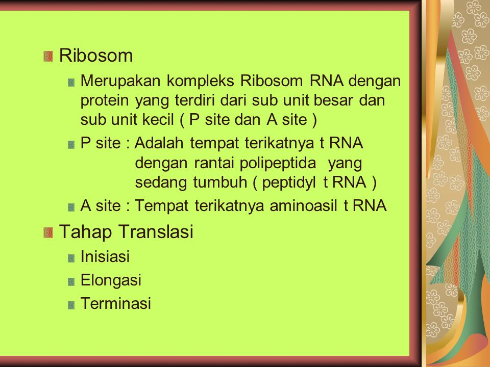 Ribosom Tahap Translasi