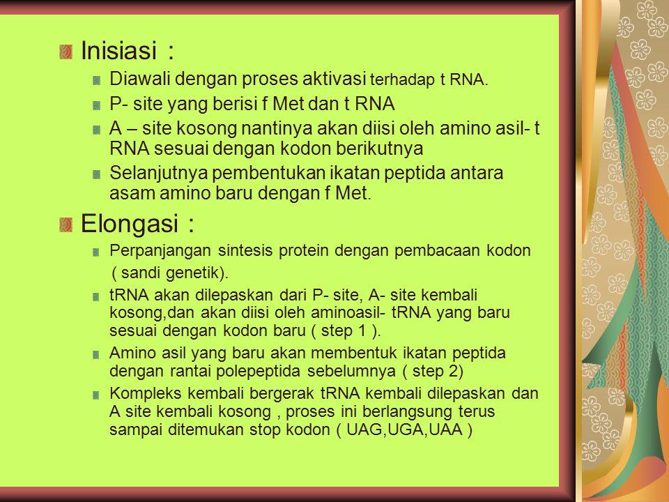 Inisiasi : Elongasi : Diawali dengan proses aktivasi terhadap t RNA.