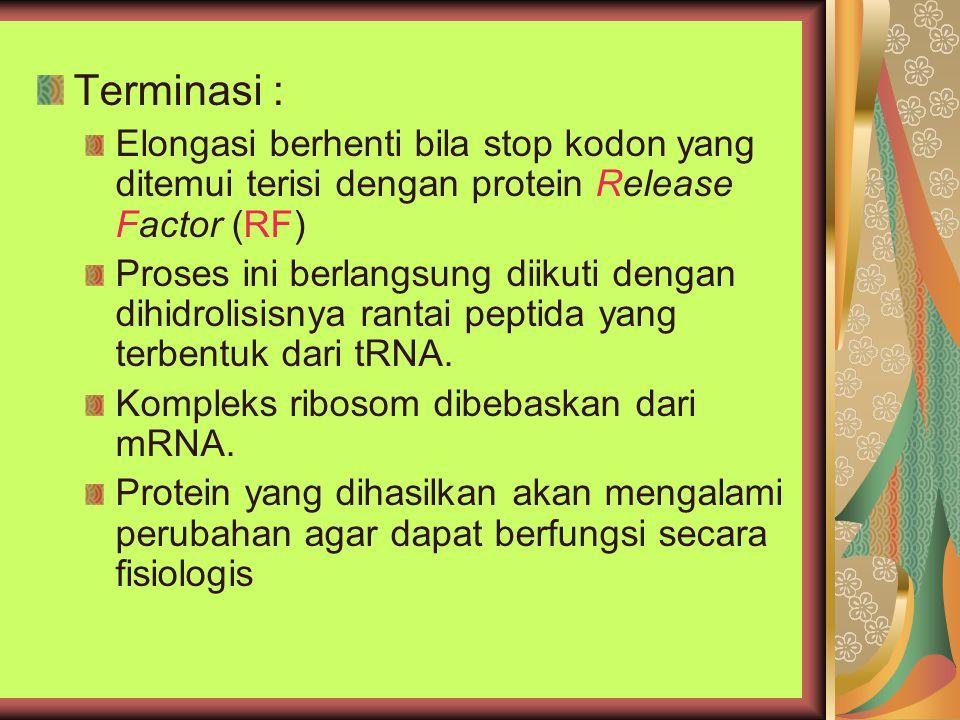 Terminasi : Elongasi berhenti bila stop kodon yang ditemui terisi dengan protein Release Factor (RF)