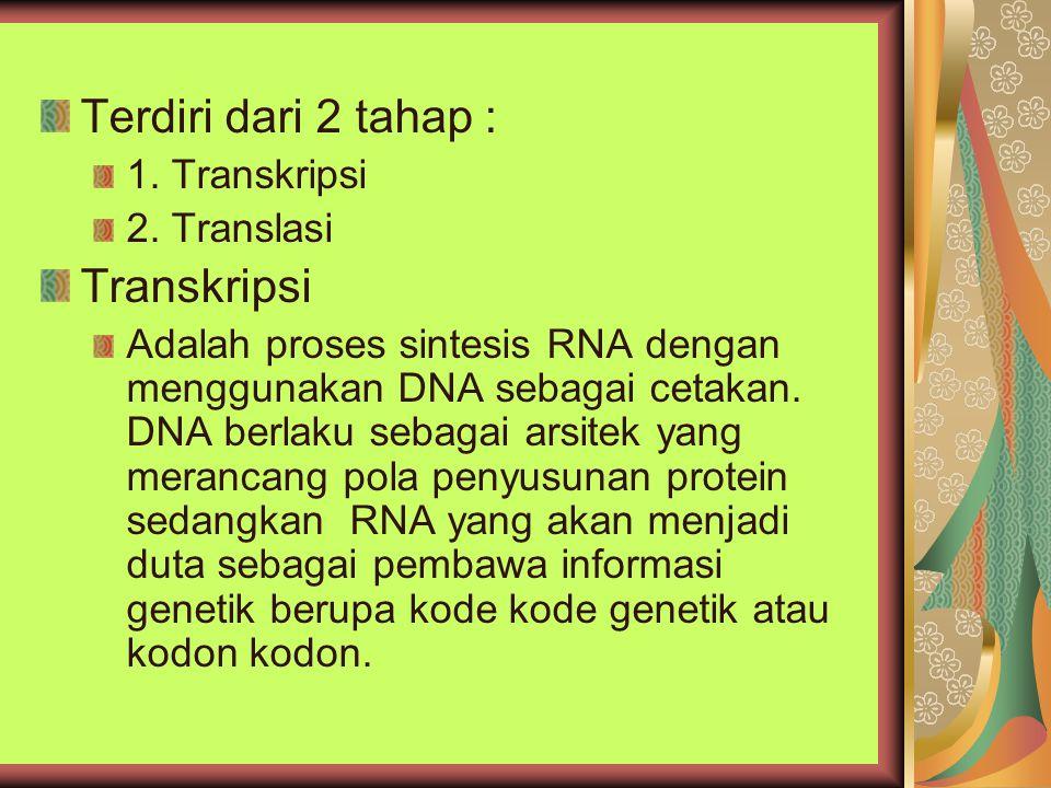 Terdiri dari 2 tahap : Transkripsi 1. Transkripsi 2. Translasi