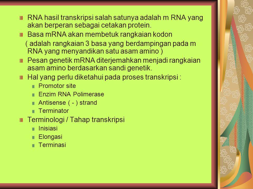 Basa mRNA akan membetuk rangkaian kodon