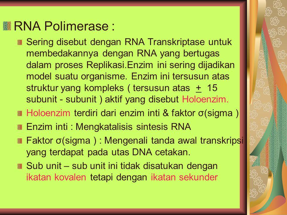 RNA Polimerase :