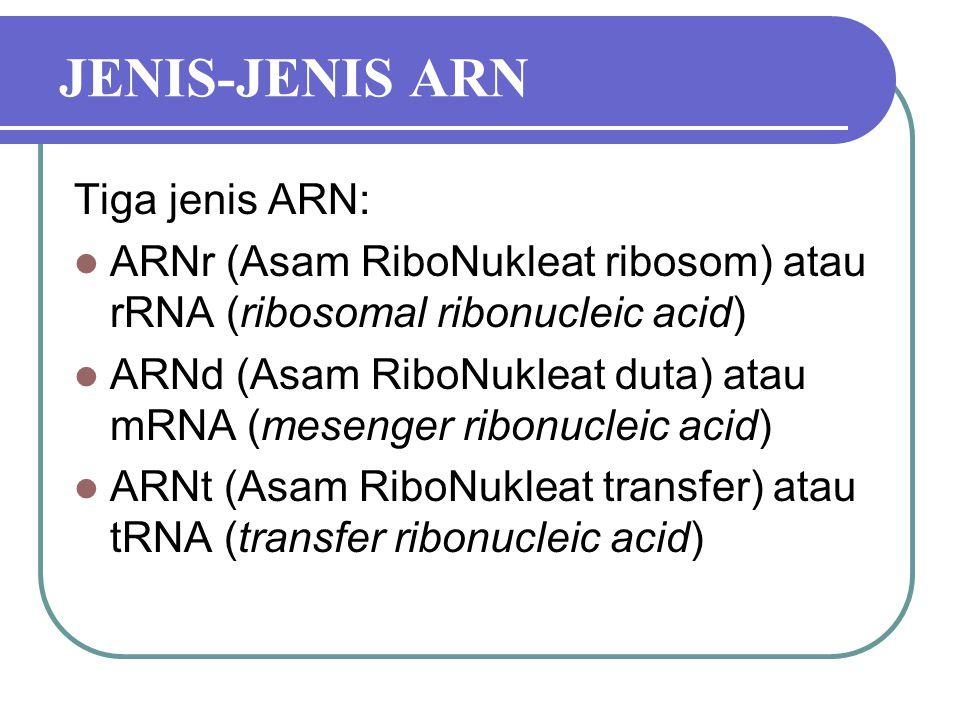 JENIS-JENIS ARN Tiga jenis ARN: