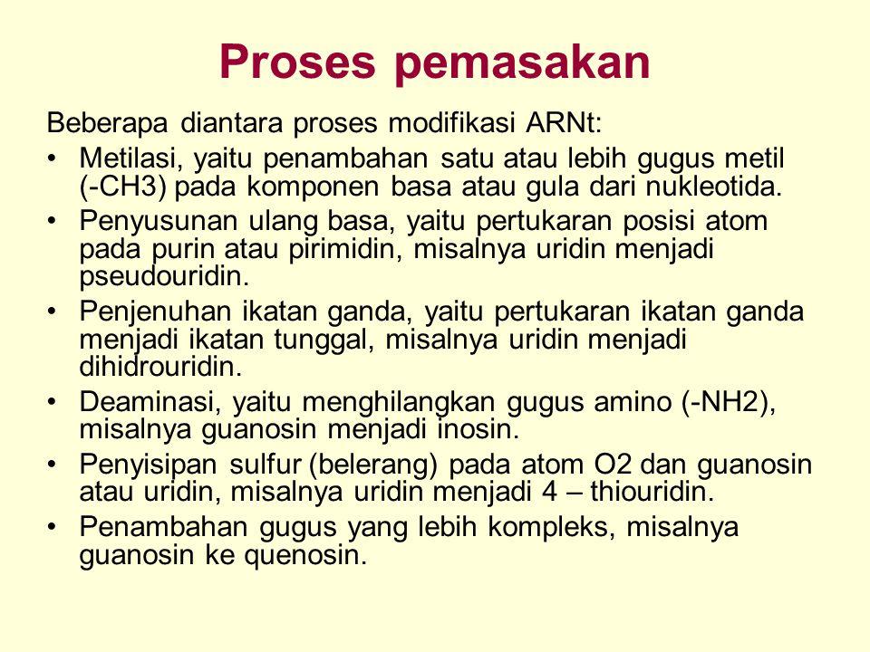 Proses pemasakan Beberapa diantara proses modifikasi ARNt: