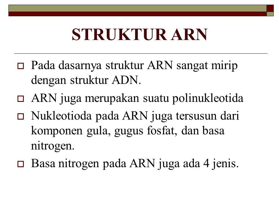 STRUKTUR ARN Pada dasarnya struktur ARN sangat mirip dengan struktur ADN. ARN juga merupakan suatu polinukleotida.
