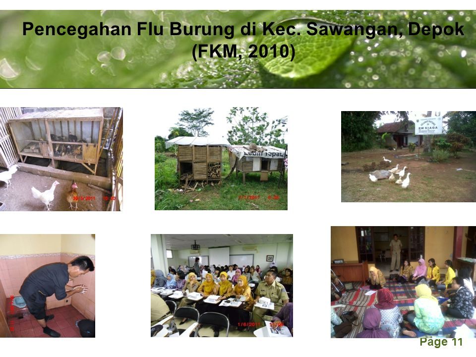 Pencegahan Flu Burung di Kec. Sawangan, Depok (FKM, 2010)