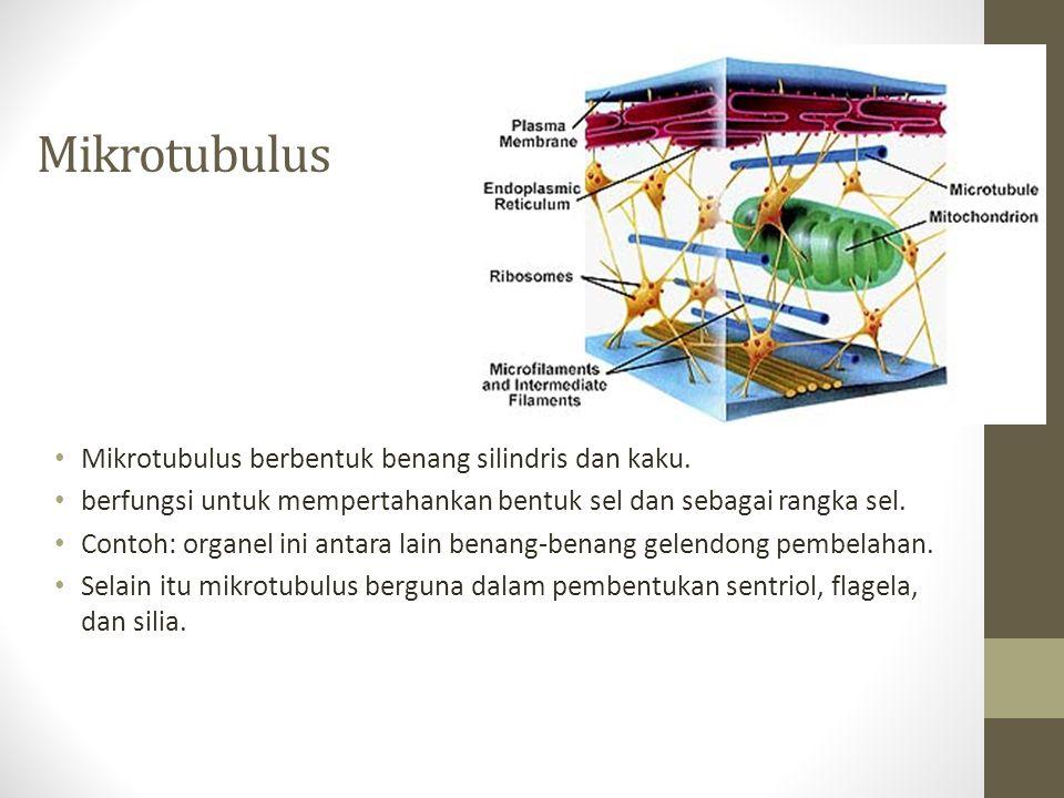 Mikrotubulus Mikrotubulus berbentuk benang silindris dan kaku.