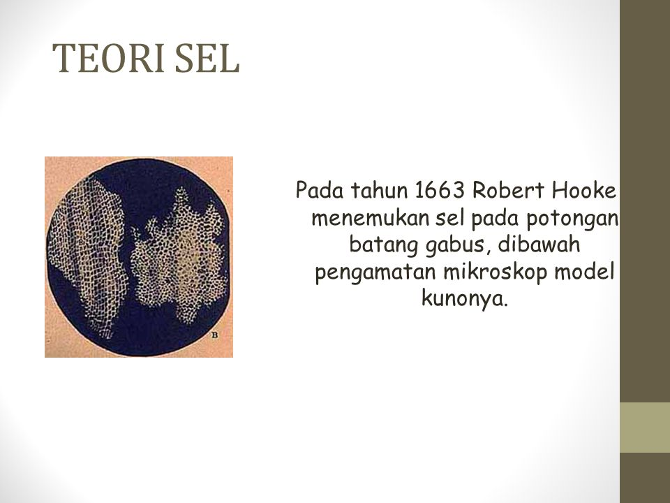 TEORI SEL Pada tahun 1663 Robert Hooke menemukan sel pada potongan batang gabus, dibawah pengamatan mikroskop model kunonya.