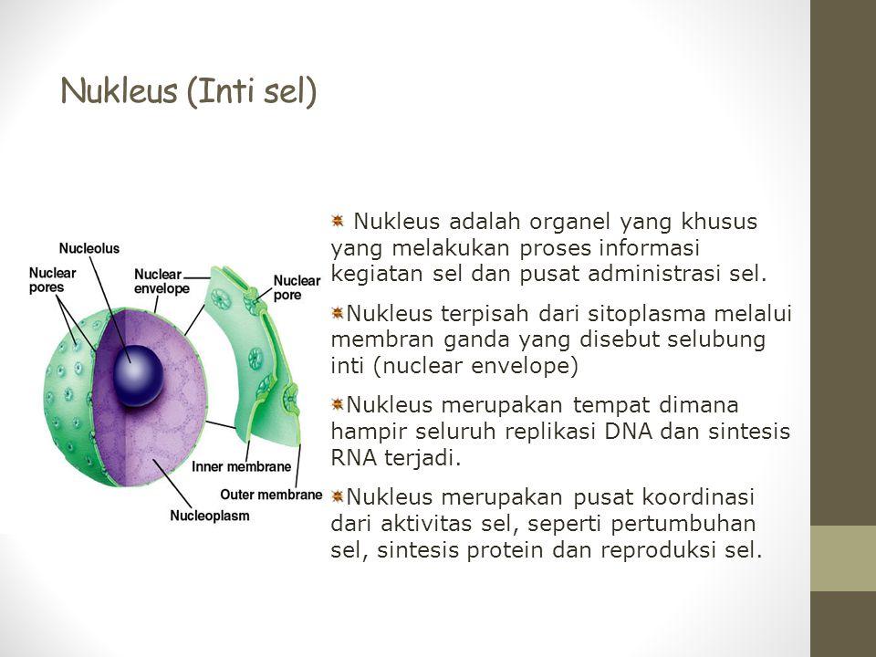 Nukleus (Inti sel) Nukleus adalah organel yang khusus yang melakukan proses informasi kegiatan sel dan pusat administrasi sel.