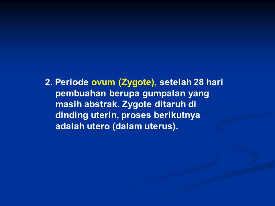 2. Periode ovum (Zygote), setelah 28 hari pembuahan berupa gumpalan yang masih abstrak.