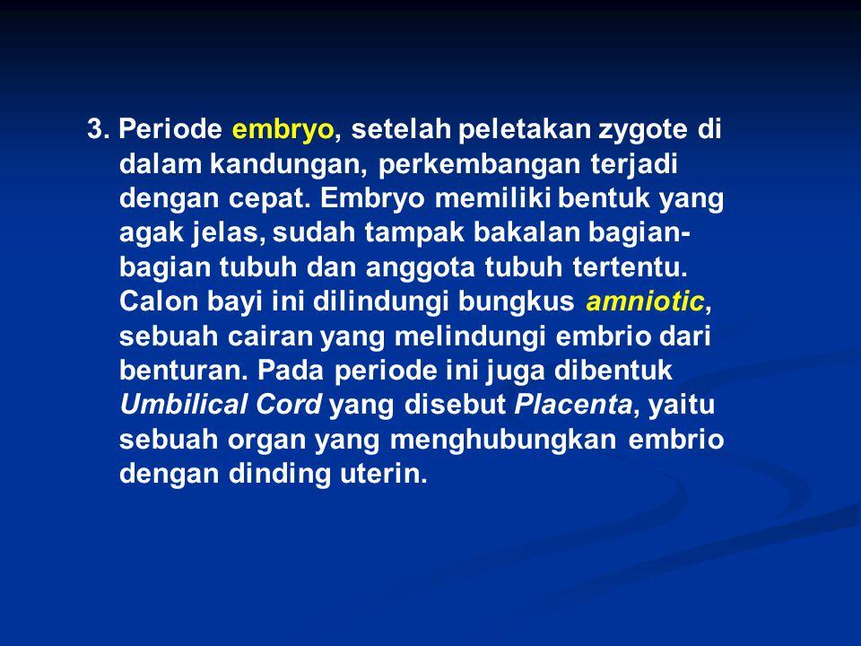 3. Periode embryo, setelah peletakan zygote di dalam kandungan, perkembangan terjadi dengan cepat.