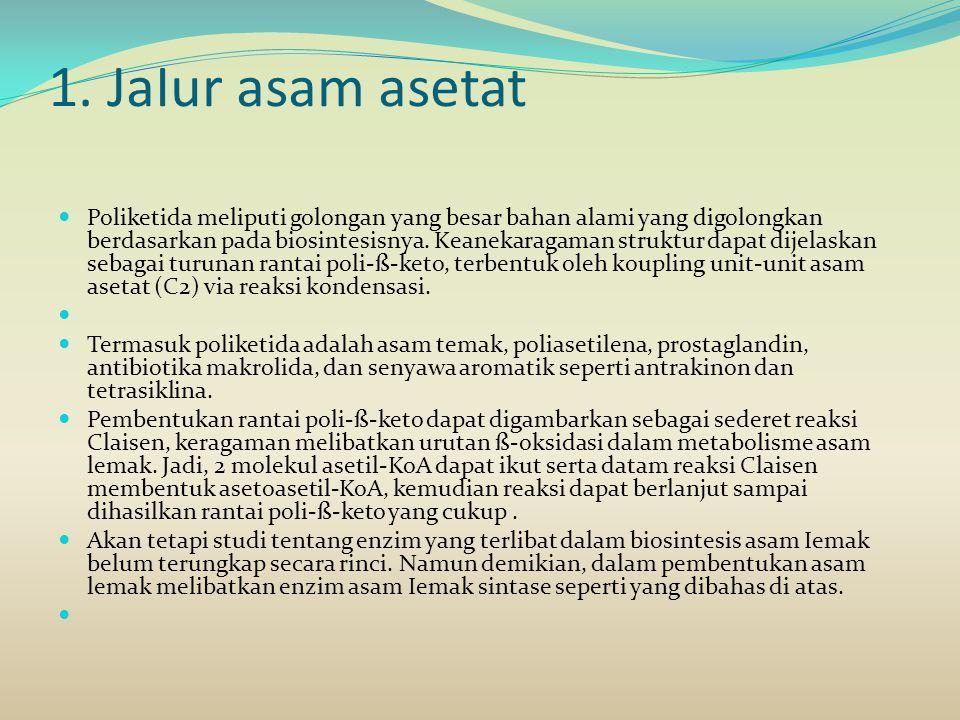1. JaIur asam asetat