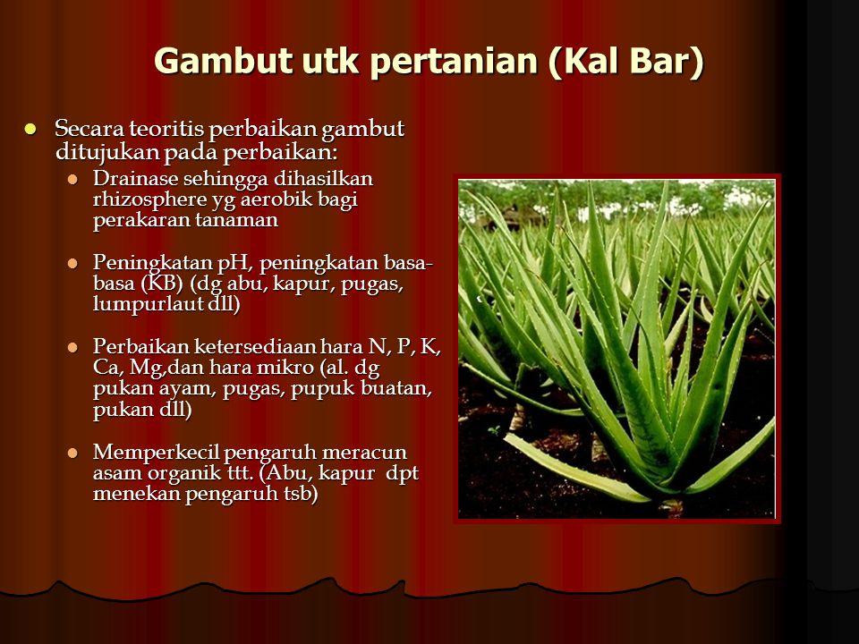 Gambut utk pertanian (Kal Bar)