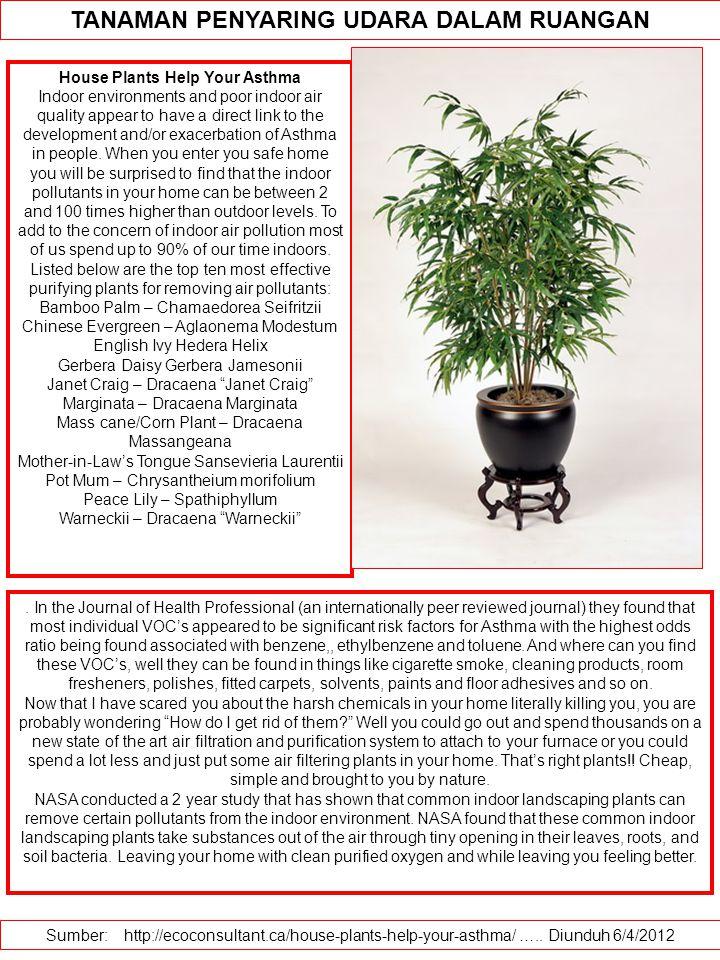 TANAMAN PENYARING UDARA DALAM RUANGAN House Plants Help Your Asthma