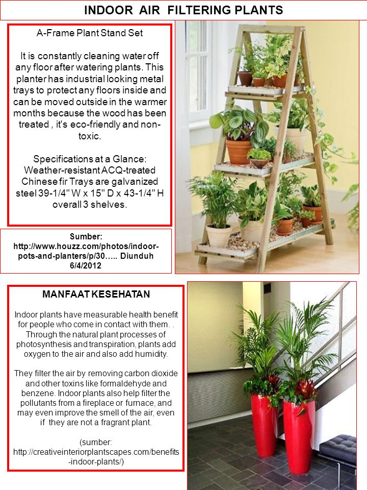 INDOOR AIR FILTERING PLANTS